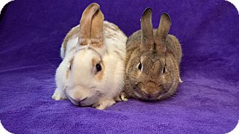 Other/Unknown Mix for adoption in Lewisville, Texas - Rosie and Rivet