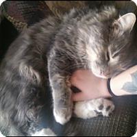 Adopt A Pet :: McScruff - Bainsville, ON