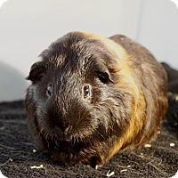 Adopt A Pet :: Lewiston - Aurora, CO