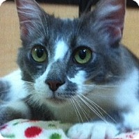 Adopt A Pet :: Sister - Modesto, CA