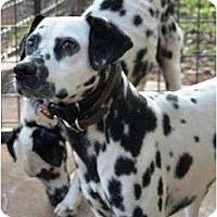 Adopt A Pet :: Freckles - Newcastle, OK