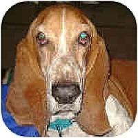 Adopt A Pet :: Bo - Phoenix, AZ