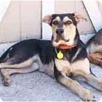 Adopt A Pet :: Delilah - San Francisco, CA