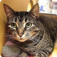 Adopt A Pet :: Raja - Foothill Ranch, CA