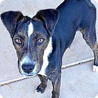 Adopt A Pet :: Leia - Scottsdale, AZ