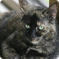 Adopt A Pet :: Honey - North Fort Myers, FL