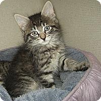 Adopt A Pet :: LANDO - 2014 - Hamilton, NJ