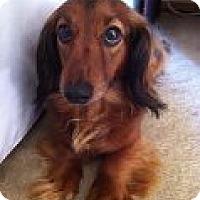 Adopt A Pet :: CHARLIE - Atascadero, CA