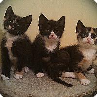 Adopt A Pet :: Munchie - Richmond, VA