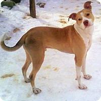 Adopt A Pet :: Derrick - Toledo, OH