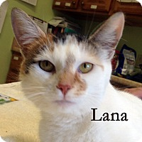 Adopt A Pet :: Lana - Warren, PA