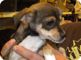 Terrier (Unknown Type, Medium) Mix Dog for adoption in Fresno, California - Skipper