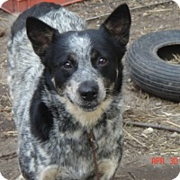 Adopt A Pet :: Sr Holly Hobbie is Pending! - Remus, MI