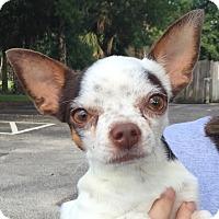 Adopt A Pet :: Benny - Orlando, FL