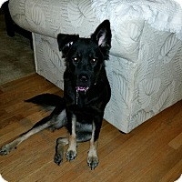 Adopt A Pet :: Kelsey (Fostered in Maine) - Greeneville, TN