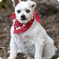 Adopt A Pet :: Wampa - Rancho Palos Verdes, CA