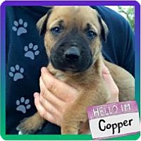 Adopt A Pet :: Copper - Marlton, NJ