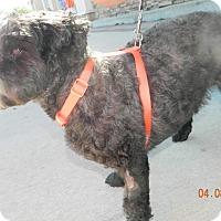 Adopt A Pet :: Baxter - Umatilla, FL