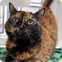 Adopt A Pet :: Tayte - Topeka, KS