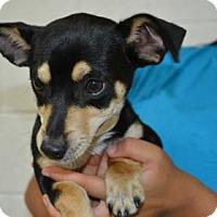 Adopt A Pet :: Brad - Miami, FL