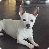 Adopt A Pet :: Blanco - Palm Harbor, FL
