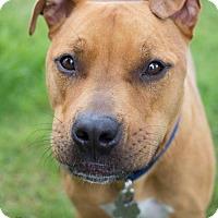 Adopt A Pet :: Diesel - Grand Rapids, MI