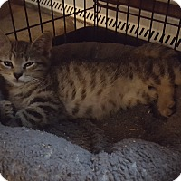 Adopt A Pet :: Nellie - Berkeley Hts, NJ