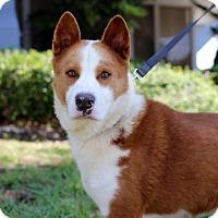 Adopt A Pet :: Ervin - San Diego, CA