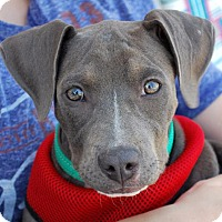 Adopt A Pet :: Laryssa - Madison, AL