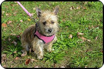 Terrier (Unknown Type, Medium) Mix Dog for adoption in Brick, New Jersey - Arizona