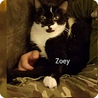 Adopt A Pet :: Zoey - Irwin, PA