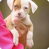 Adopt A Pet :: Penelope - Princeton, MN
