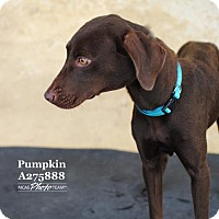 Adopt A Pet :: MEKA - Conroe, TX
