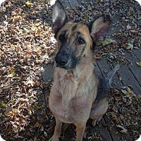 Adopt A Pet :: Liberty - Dayton, OH