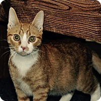 Adopt A Pet :: PJ - Lakeland, FL