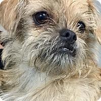 Adopt A Pet :: Kermit - Oswego, IL