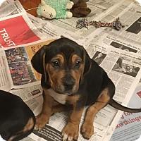 Adopt A Pet :: Jed - Doylestown, PA