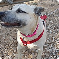 German Shepherd Dog Mix Dog for adoption in Weatherford, Texas - BELLA