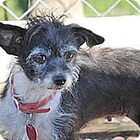 Adopt A Pet :: Jewel (Courtesy List) - Richmond, VA
