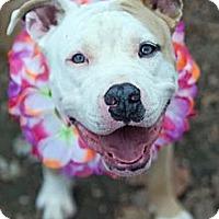 Adopt A Pet :: Carmel - Shavertown, PA