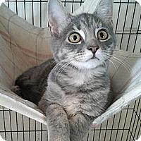 Adopt A Pet :: Pippa - Germansville, PA