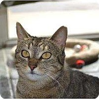 Adopt A Pet :: Bell - Metairie, LA