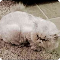 Adopt A Pet :: Grissom - Davis, CA