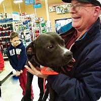 Adopt A Pet :: Oreo - Midlothian, VA