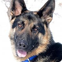 Adopt A Pet :: Max - Wayland, MA