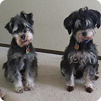Adopt A Pet :: George & Phoebe - Lynnwood, WA