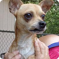 Adopt A Pet :: Braddock - Crump, TN