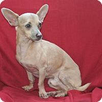 Adopt A Pet :: Carlo - Umatilla, FL