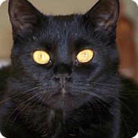Adopt A Pet :: Rosemary - Colorado Springs, CO