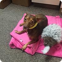 Adopt A Pet :: Tim - Houston, TX